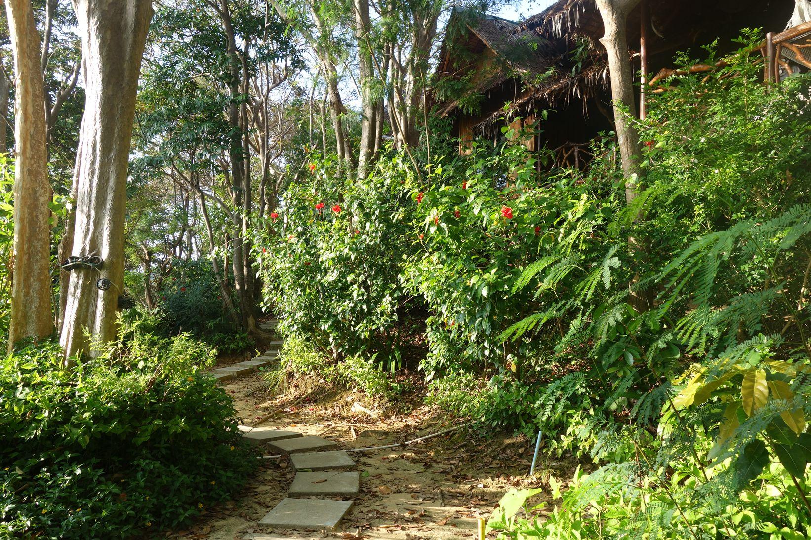 Jungle à Koh Phi Phi
