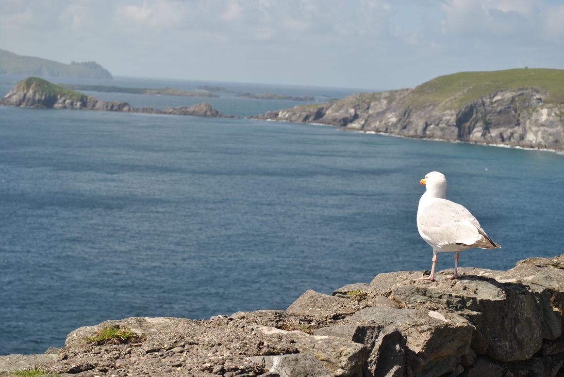 Péninsule de Dingle en Irlande - Ici et la en famille