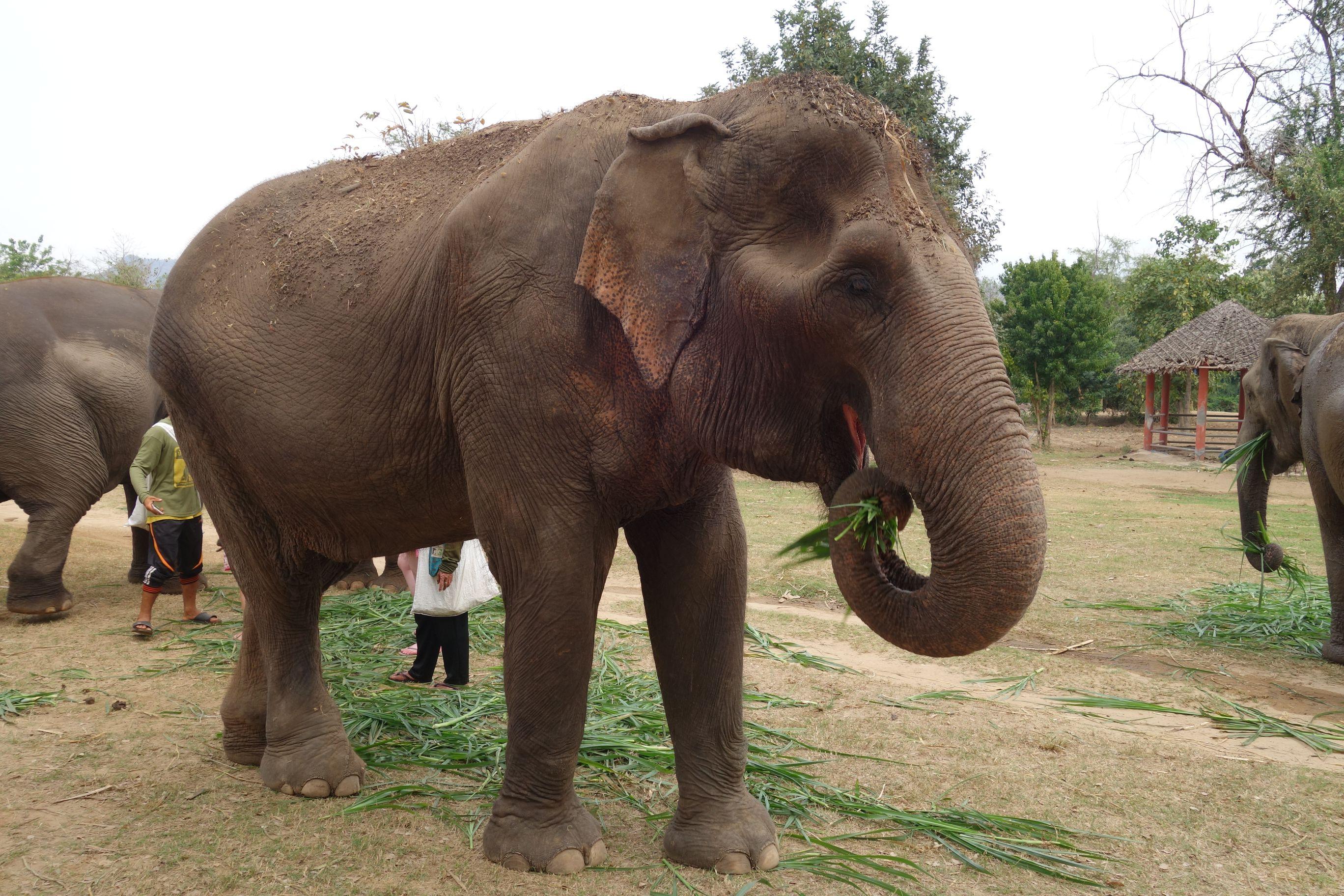 Elephants en Thaïlande - Ici et la en famille