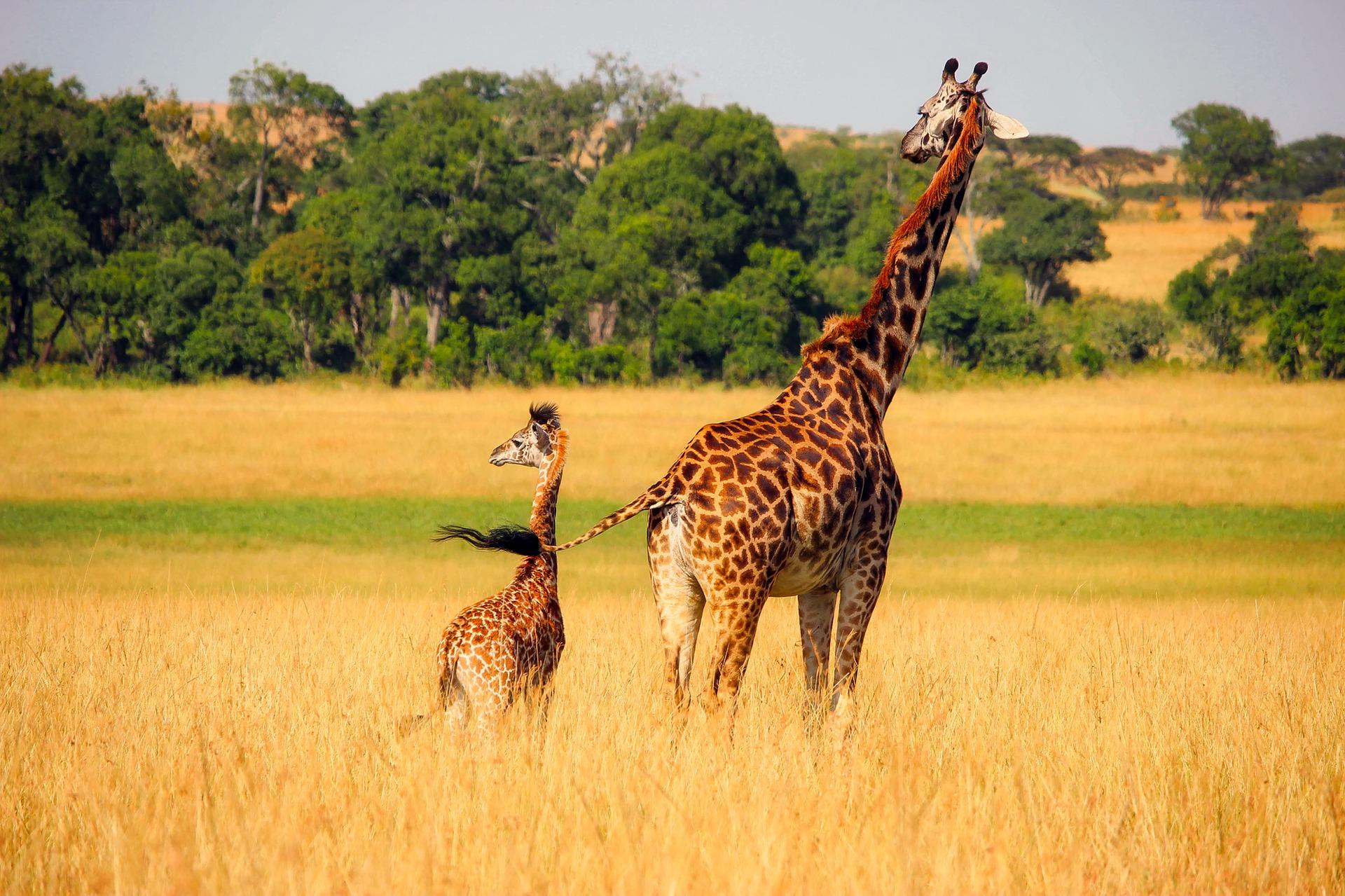 Afrique du Sud - octobre